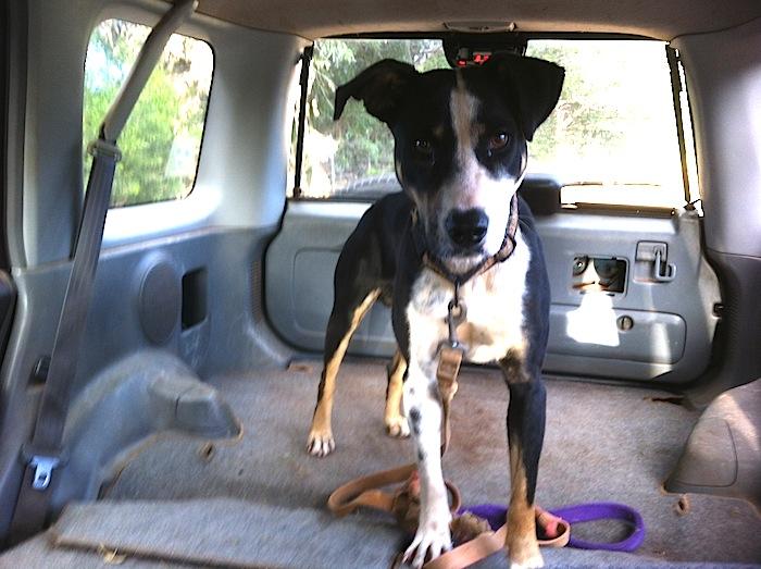 Zorro the dog