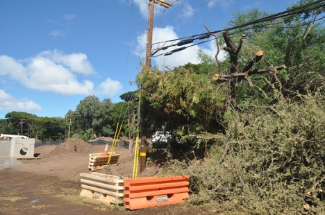 A tree that had fallen across power lines near the construction for the new Kawela Bridge had to be removed Sunday morning.